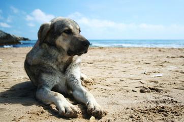 Dog lying on the sandy beach
