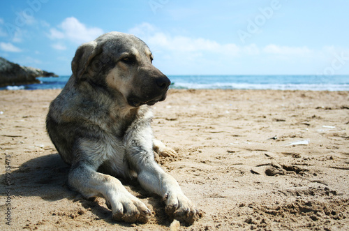 Dog lying on the sandy beach