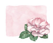 Watercolor background with rose illustration