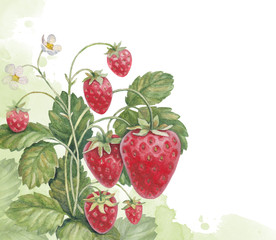 Watercolor strawberry bush