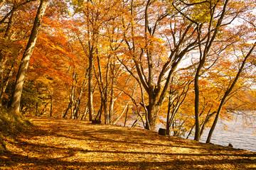 中禅寺湖の湖畔遊歩道