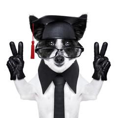 graduate dog