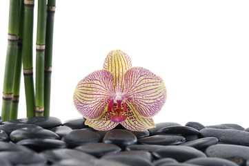 Gorgeous orchid with thin bamboo grove on pebbles