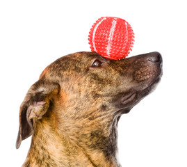 Mixed breed dog balancing ball on nose. isolated on white