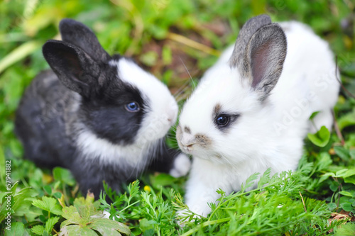 Funny baby rabbits in grass
