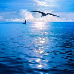 Dawn under sails. Sea View.