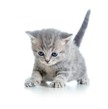 Lustig Fuß Katze Kätzchen