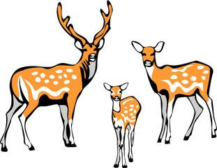 sika deer family