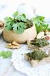 homemade pate cilantro