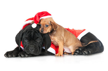 two puppies in a santa hat