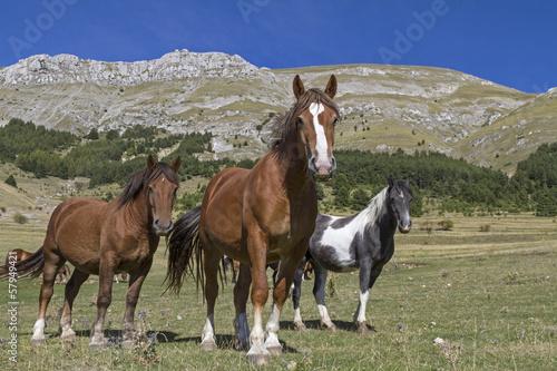 Pferdesommer in den Bergen