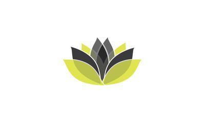 Lotus new concept