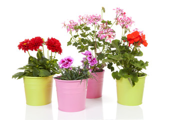 Different flowers in colorful pot