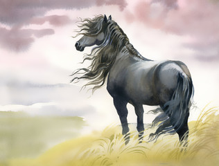 Black horse in a field