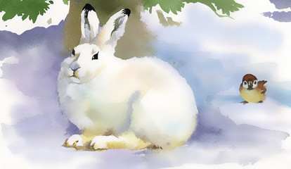 Winter rabbit