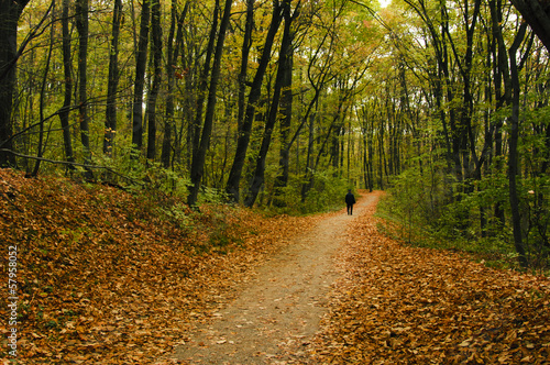 Road in wood