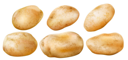 potato tubers on a white background