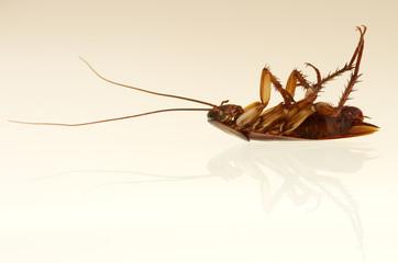 Cockroach profile
