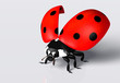 Ladybird with an open elytra