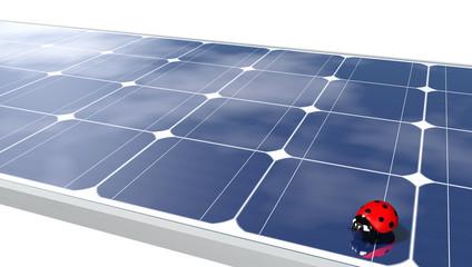 Ladybug on solar panels