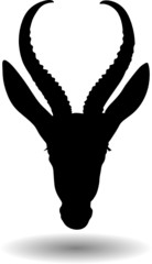 antelope head
