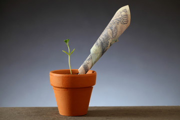 Money growth - Business concept