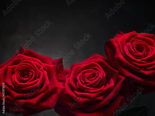 Fototapeten,rose,drei,liebe,blume