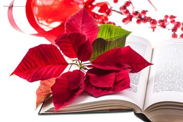 Poinsettia on bible