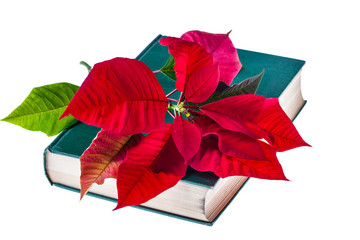 Poinsettia on book