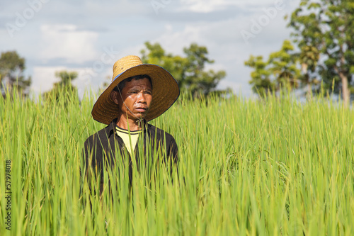 Farmers in the rice field