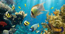 Koraller och fiskar