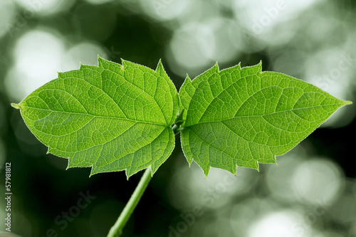 Closeup view of fresh green leaves