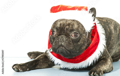 French bulldog dressed up for Santa Claus