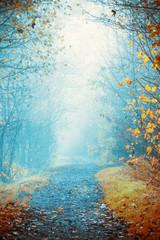 Foggy day in autumn