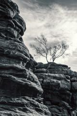 tree canyon