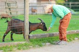 Kind teenager boy feeds goat in a children farm at the park  poster