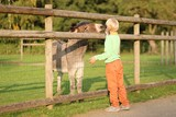 Kind teenager boy feeds donkey in a children farm  poster