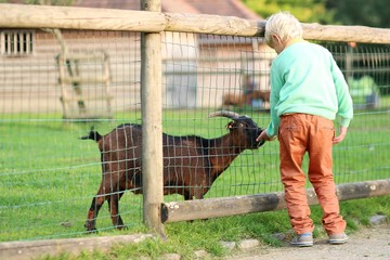 Kind teenager boy feeds goat in a children farm at the park