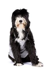 a farmer dog