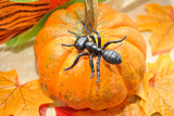 Toy Ant on a Fall Pumpkin