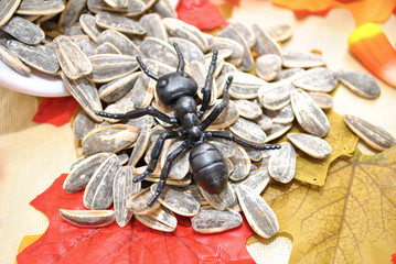 Toy Ant on Sunflower Seeds