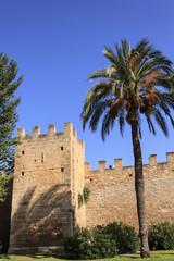 Stadtmauer in Alcudia mit Palme unter blauem Himmel