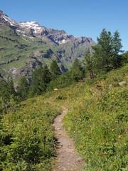 Chemin de randonnée en montagne