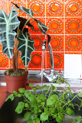 Still life of plants in kitchen sink