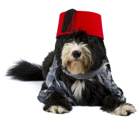 dog and fez