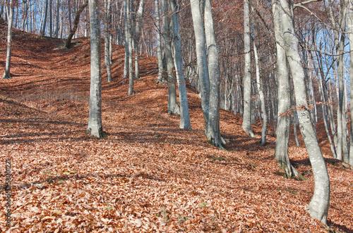 Fototapeten,herbst,rot,wald,hintergrund