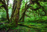 Fototapety Green forest