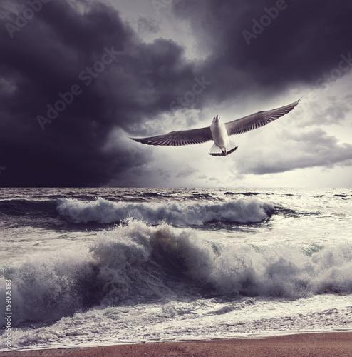 Sea gull © Galyna Andrushko