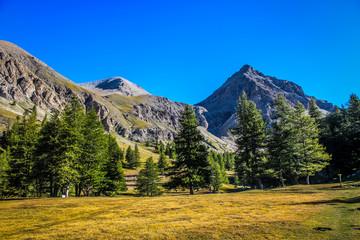 Montagnes et patures