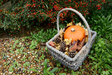 Autumn basket with pumpkin, fir cones and leaves